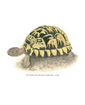 Colección Reptiles, Tortuga...